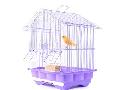 canarino in gabbia canarino nella gabbia fotografia stock immagine di gabbia