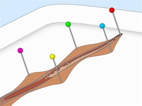 earthworm dissection steps how to dissect a worm wikihow