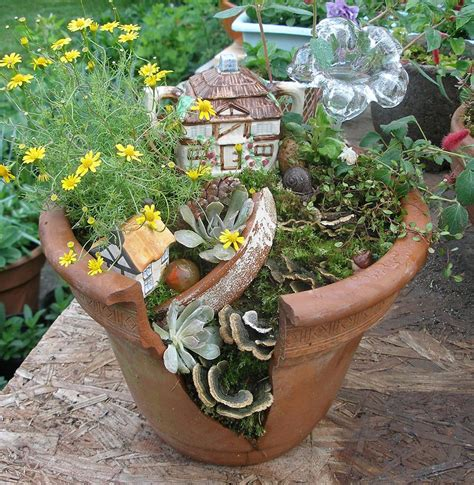 Miniature Plants For Sale | miniature gardening forum this year s community plant