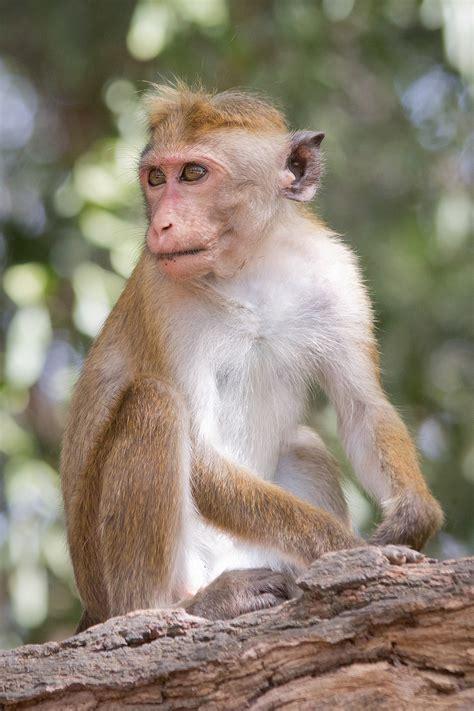 monkey and monkey