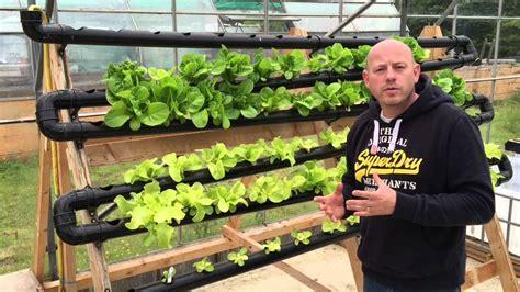 chilli farm aquaponics hydroponics diy nft system