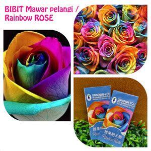 Bibit Rainbow cv bibit unggul jual bibit mawar pelangi asli rainbow