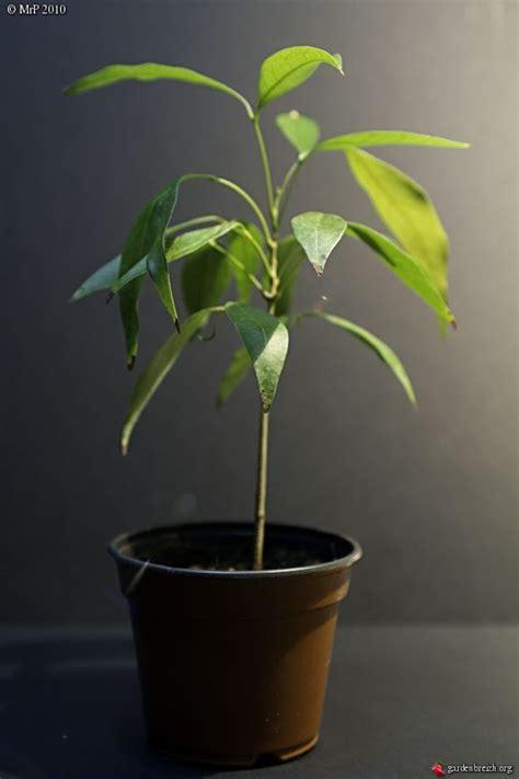Marc De Café Plante Intérieur les 25 meilleures id 233 es de la cat 233 gorie plante d int 233 rieur