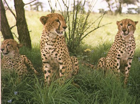 african safari animals beautiful african animals safaris