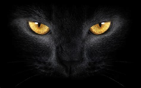 black cat eyes wallpaper  images