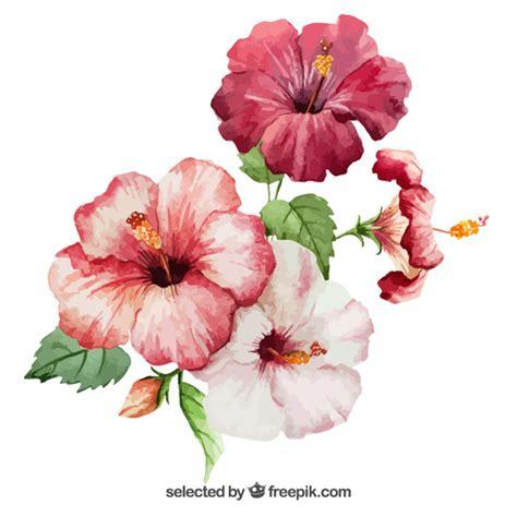 free vector watercolor flowers watercolor hibiscus flowers vector free download