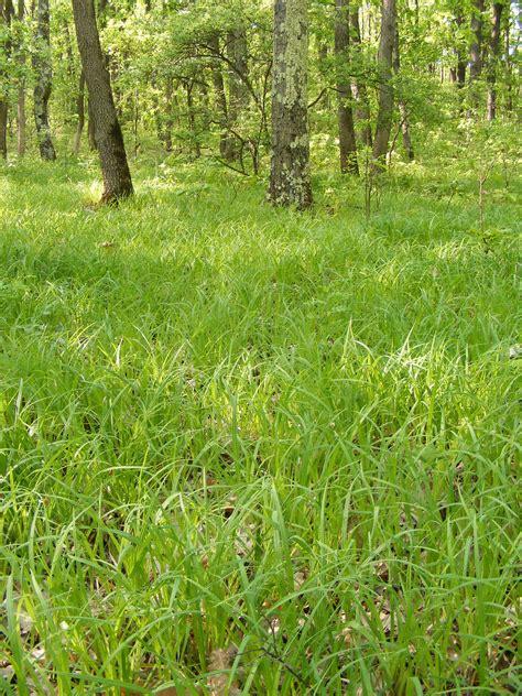 gambar pohon alam menanam halaman rumput padang