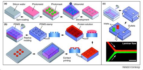 Otco Stem I Dna Limited from 3d cell culture to organs on chips trends in cell