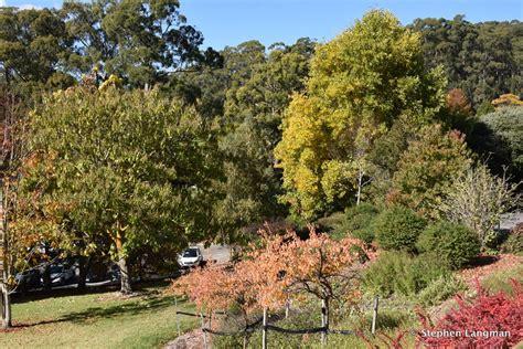 Botanic Gardens Sa Mt Lofty Botanic Gardens Sa Exploroz Places