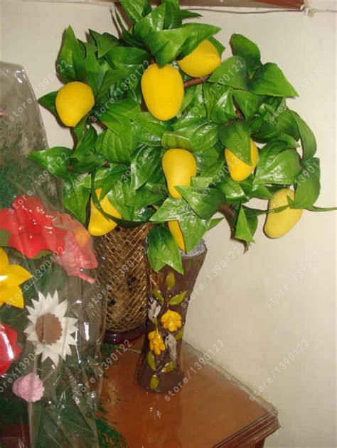 94 fruit with seeds buy wholesale mango seeds from china mango seeds
