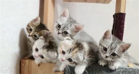imagenes que se mueven gatos 161 curiosos gatitos se mueven en perfecta sincron 237 a que