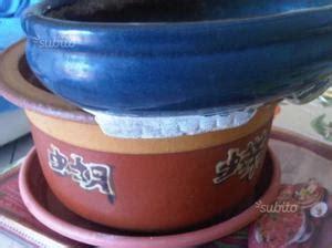 vasi per bonsai grandi vasi per bonsai in pietra posot class