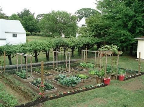 Bibit Cabe Impor jual benih sayuran benih sayuran murah bibit sayuran
