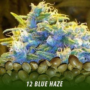 blue haze cannabis seeds sale 12 seeds $19