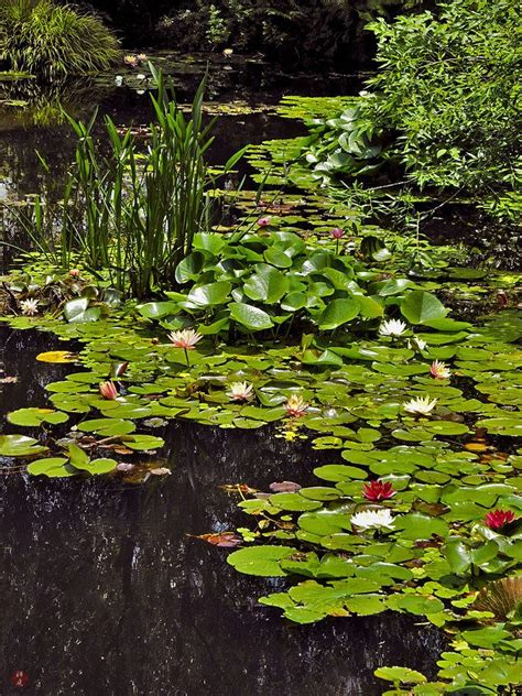 themes the god of small things 25 best ideas about lily pond on pinterest water lilies