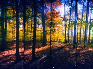 In Fall Quot Forest In The Fall Quot By Dmitrizzle Artsocket Gallery