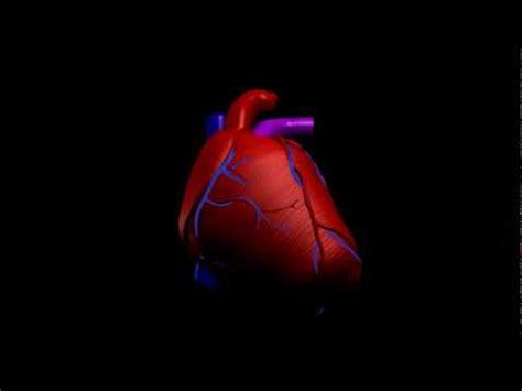 imagenes de corazones latiendo en movimiento corazon 3d youtube