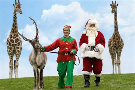 santa safari to start at west midland safari park