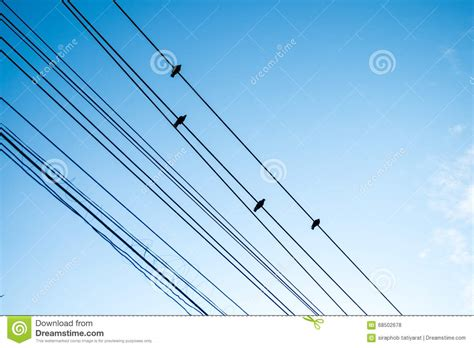 birds electrical wire stock images jeffdoedesign