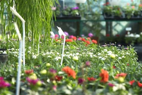 wur bloemen leo marcelis hoogleraar tuinbouw aan wageningen university