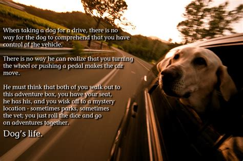 what do dogs think what do dogs think of the car by mr4653 on deviantart