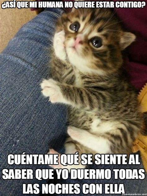 google imagenes de gatos gatitos y perritos graciosos con frases buscar con