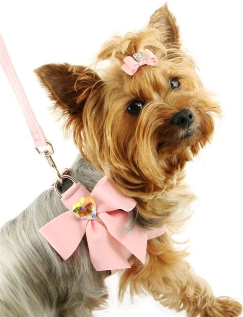 fancy puppy fashion week 2015 fashion trends for hip pets