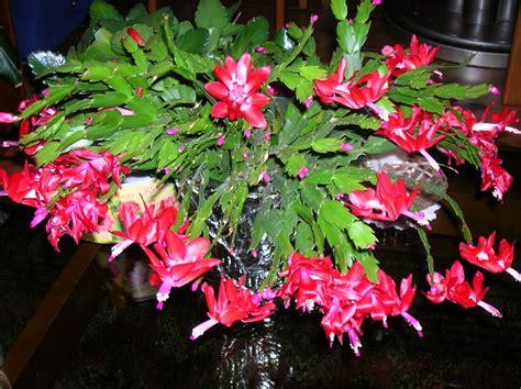immagini di fiori e piante piante di fiori piante e fiori simboli e significati