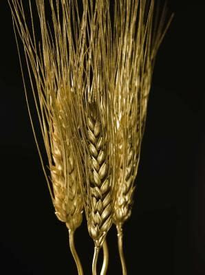 Wheat Detox Rash by What Are The Benefits Of Toasted Wheat Germ Anxiety