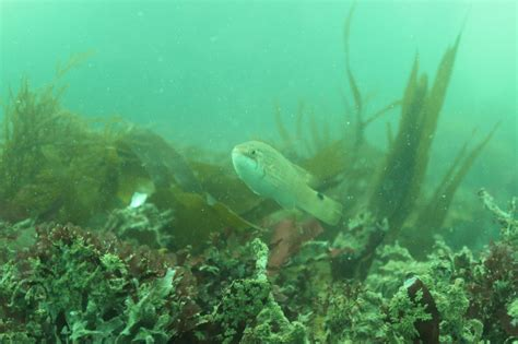 plymouth diving diving plymouth