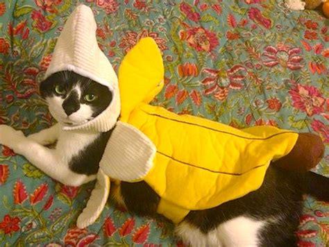 banana kitten named orfey cats pet costumes 2013 petful