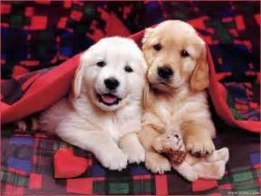 Dogs Dogs Images So Sweet Hd Wallpaper And Background Photos