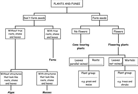 classification chart classification system chart figure 3 plant
