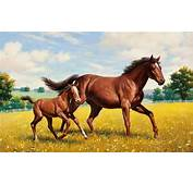Horse Baby And Mother Animal  HD Wallpapers Rocks