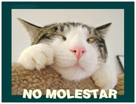imagenes chistosas con frases para descargar gratis im 225 genes originales con perros y gatos para descargar