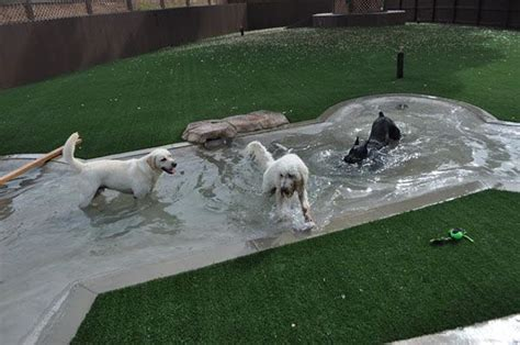 backyard dog pool 82 best pawsh play aka outdoor doodle dog spaces images on