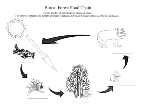 coloring pages of food webs food web coloring pages vitlt com