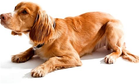 signs of pancreatitis in dogs pancreatitis in dogs vca animal hospital
