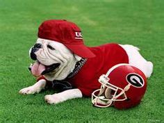 1000+ images about ga bulldogs   i love my dawgs! on