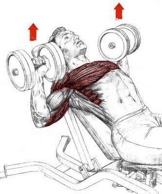 Developpe Incline Haltere le programme de musculation que vous ne devez rater sous