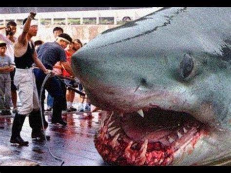 world's biggest shark ever! megalodon youtube