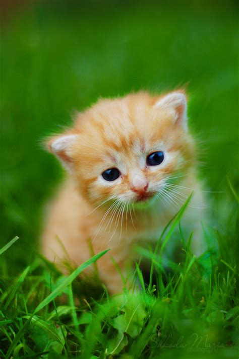 pictures of the cutest in the world cutest kittens in the world 5 photos small kittens animal and cat