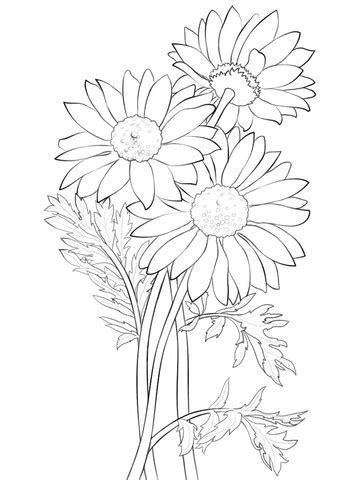 Desenhos de Margaridas Para Imprimir e Colorir - Flores