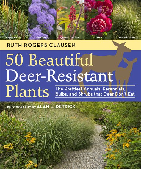 deer resistant plants 50 beautiful deer resistant plants the prettiest annuals