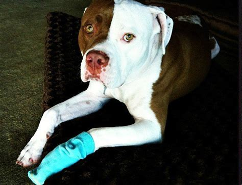 paw pad injury cracked pads on dogs shaken