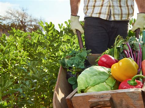 7 Things To About Organic by 7 Things You Didn T About Organic Farming