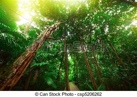 stock photo of forest old trees in a tropical evergreen