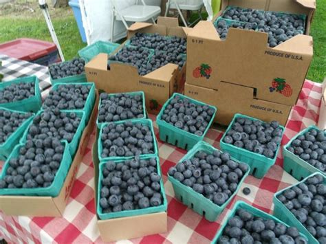 lincoln center farmers market lincoln city farmers market or top tips before you go