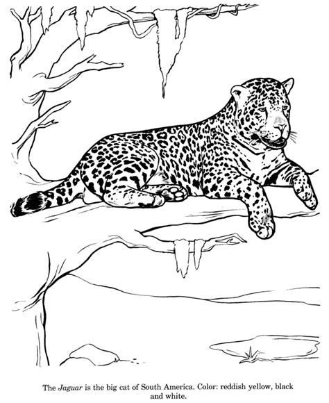 free printable jaguar coloring pages free coloring pages of jaguars
