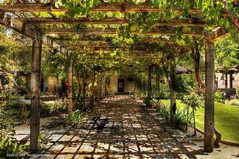 backyard grape vine trellis designs 17 best images about grapevine trellis ideas on pinterest gardens arbors and
